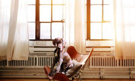 Hold huset flot med hund i hjemmet